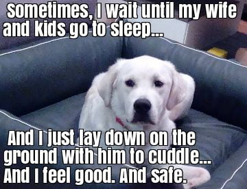 My Therapy Dog 9gag
