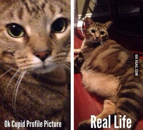 Online dating Cats