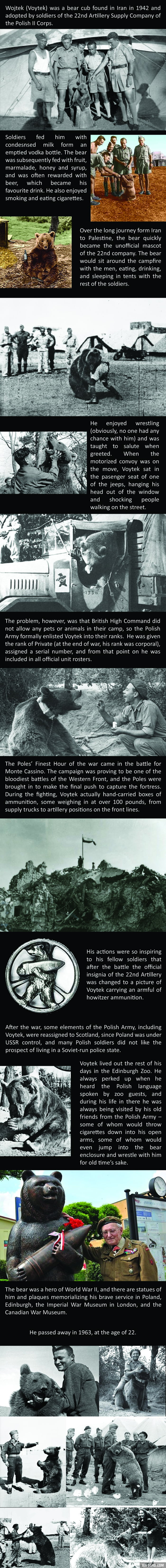 The amazing story of Voytek the Soldier Bear