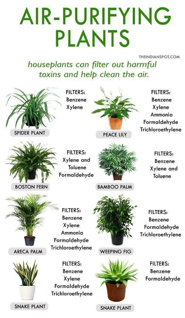 Air-purifying plants - 9GAG