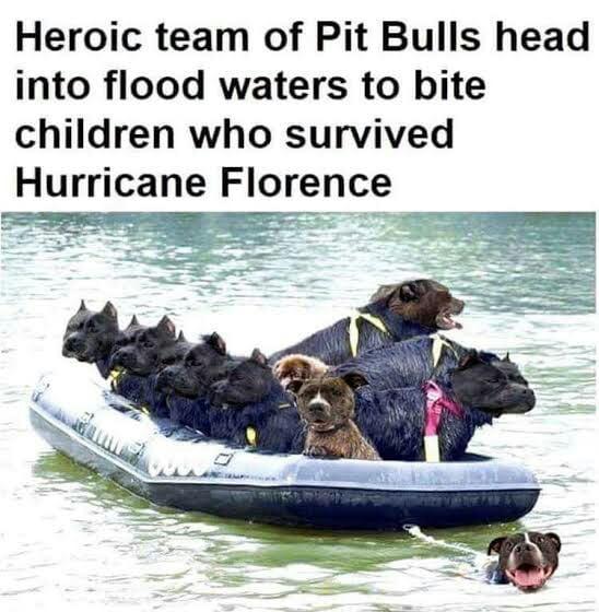 Meme Lords, share all the pitbull meme you have  - 9GAG