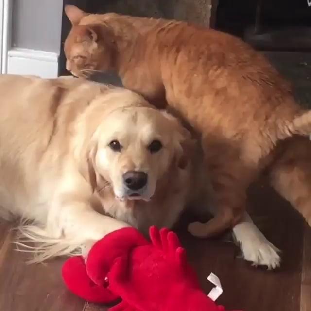Please no touchy