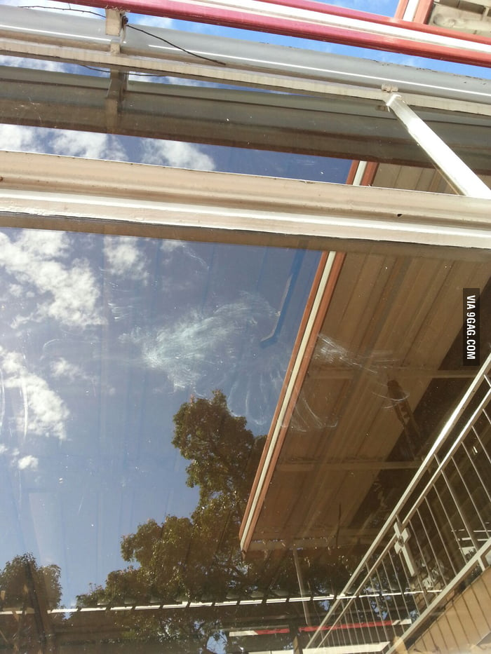 A bird flew into the window leaving    feather print - 9GAG