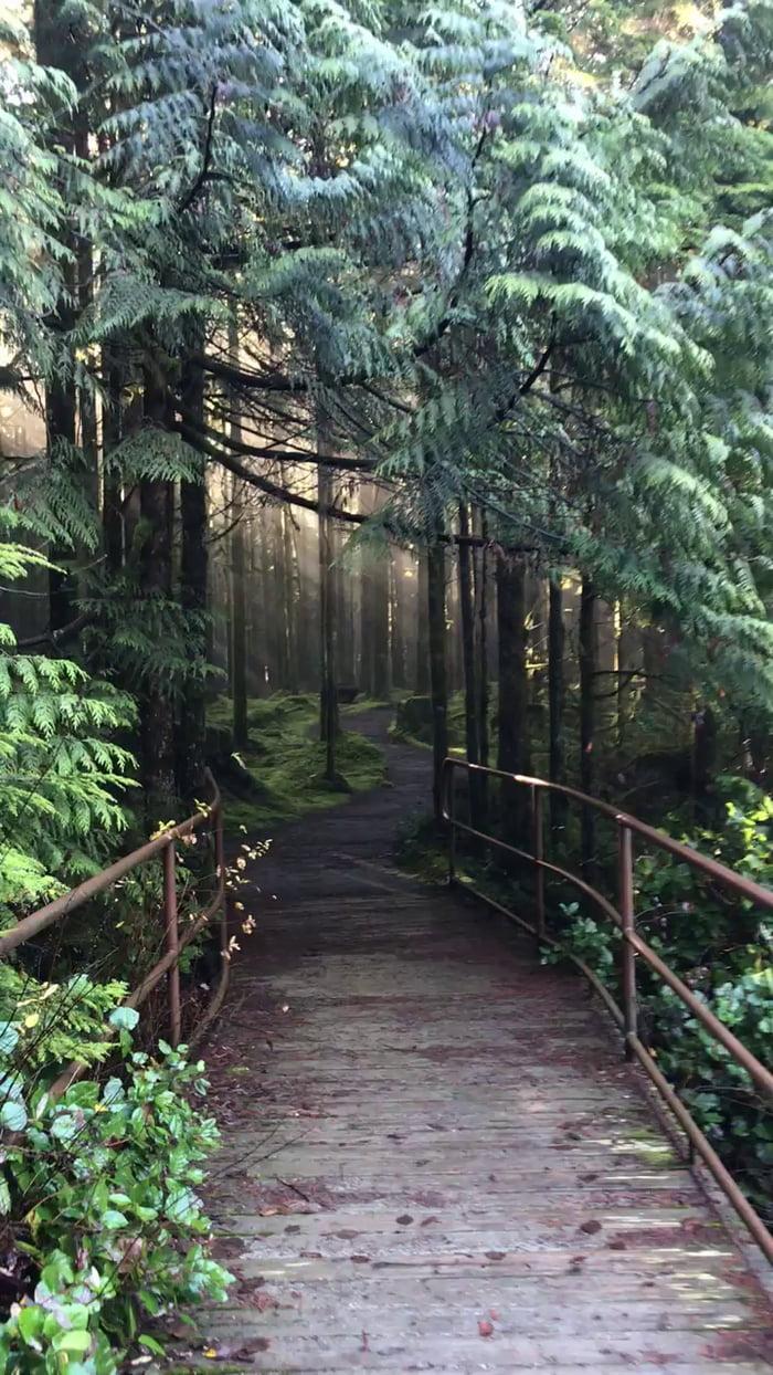 гиф прогулка по лесу отдыха вишнёвые