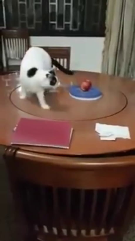 You spin meow right round...