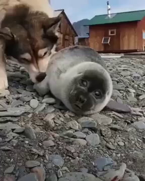 Baby seal and his dog friend.