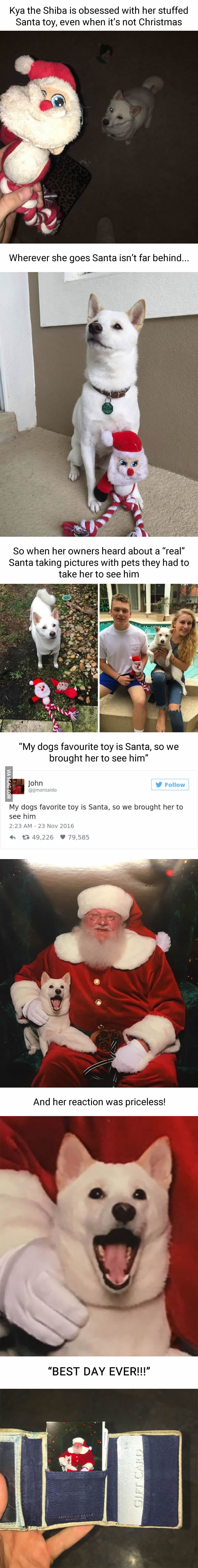 White Doge Obsessed With Stuffed Santa Finally Gets To Meet Her - Dog obsessed with stuffed santa toy gets to meet her idol in real life