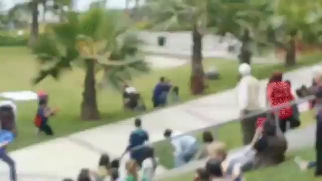 Skating Dog hits again