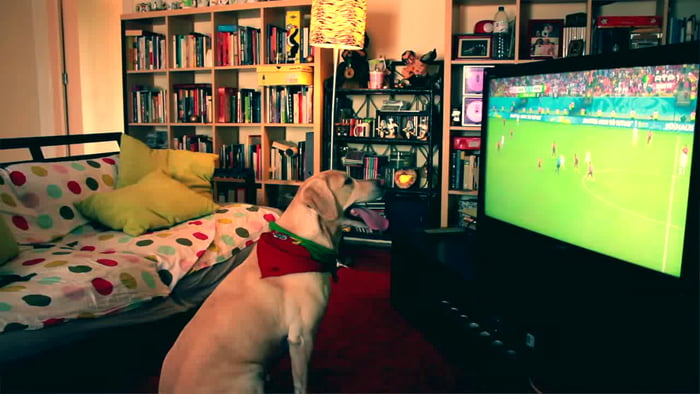 This dog is more enthusiastic than I am while watching football