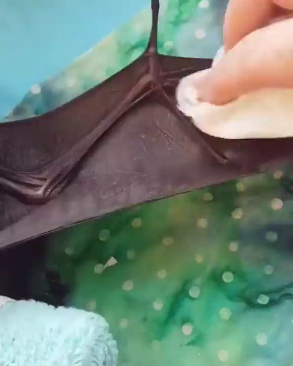 Caretaker demonstrating how to properly clean your baby bat