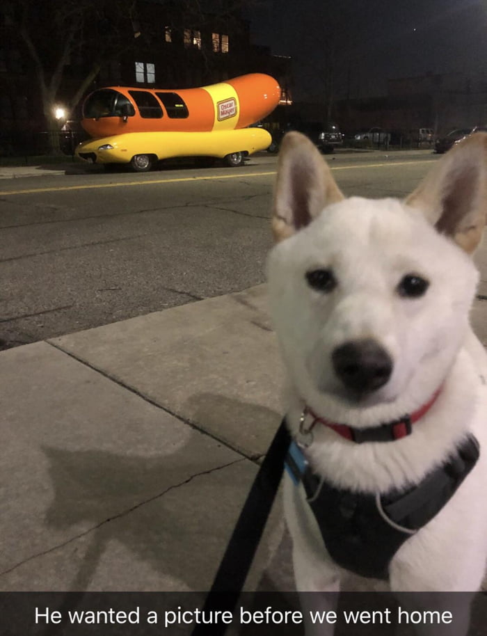 On the walk to the dog park he spotted an Oscar Meyer wiener car...