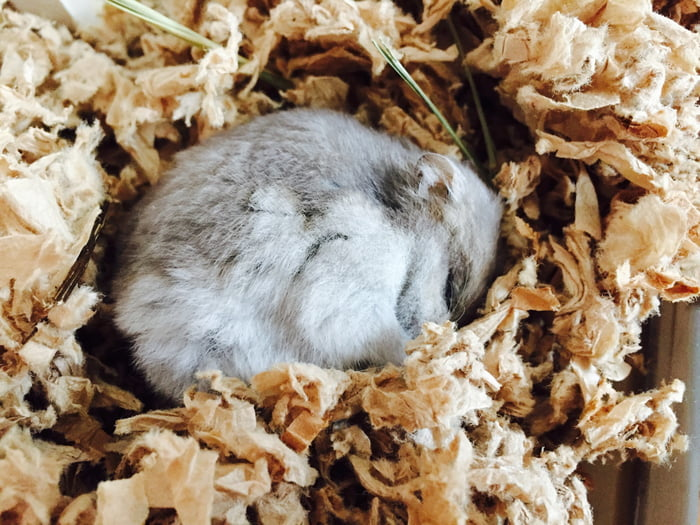 My hamster died yesterday, I hope I'll look as peaceful when