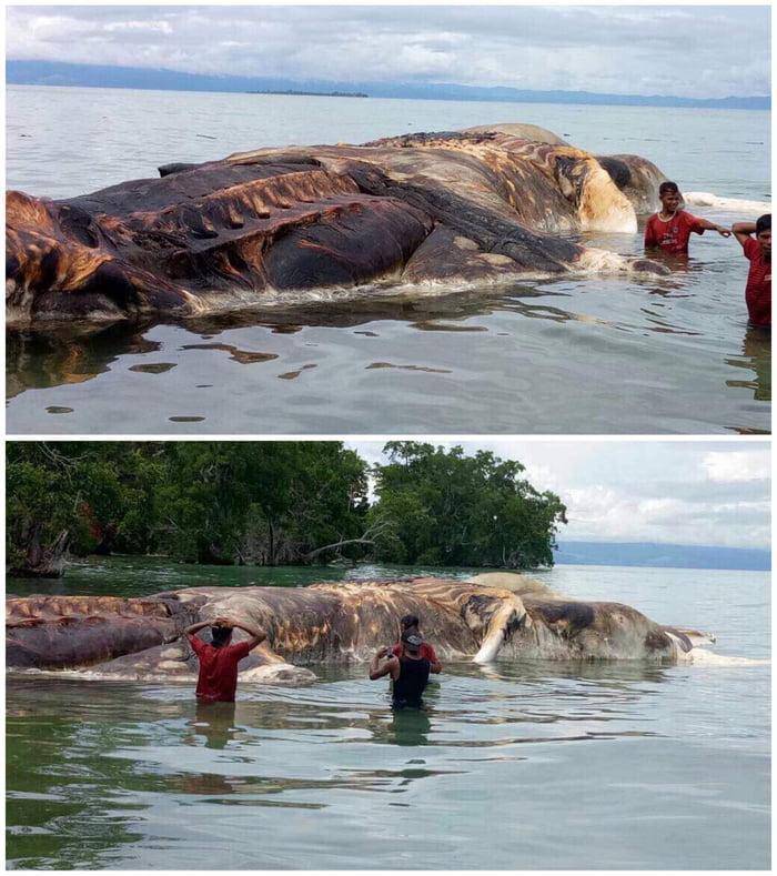 Kraken Indonesia