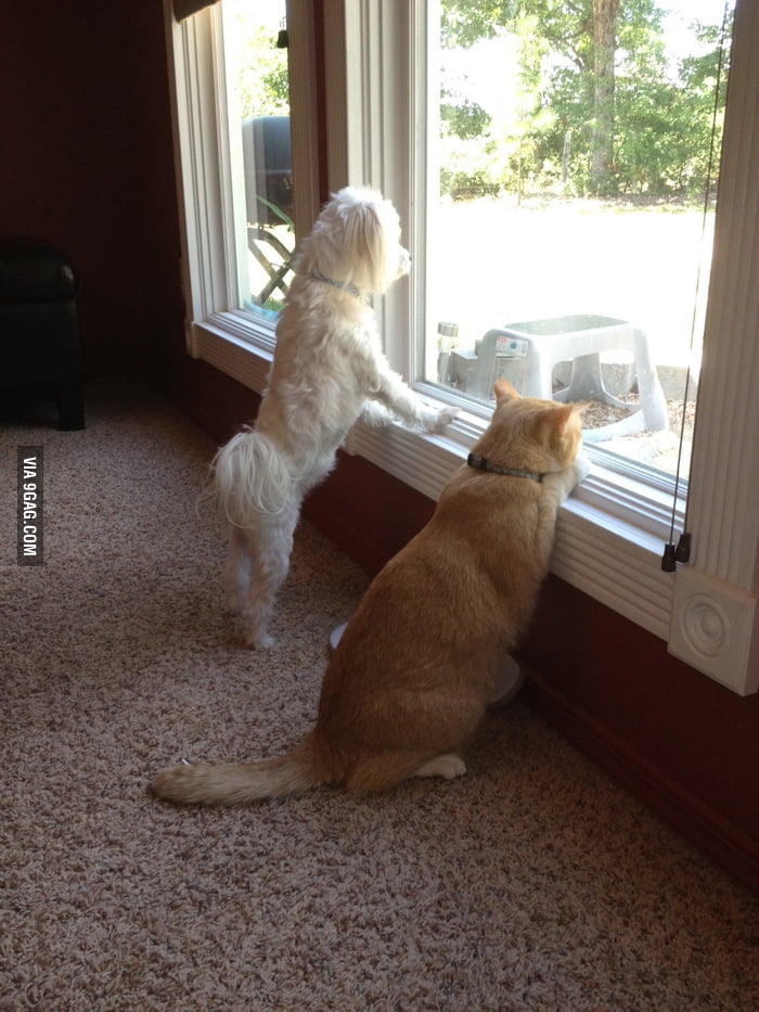 Dog barking at the squirrel, which really irritated the cat who was