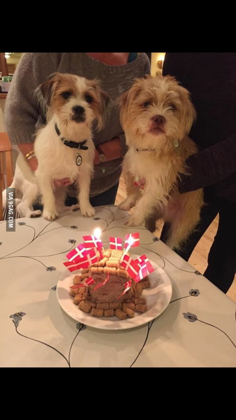 Outstanding Made A Birthday Cake For My Dog And His Sister 9Gag Personalised Birthday Cards Akebfashionlily Jamesorg