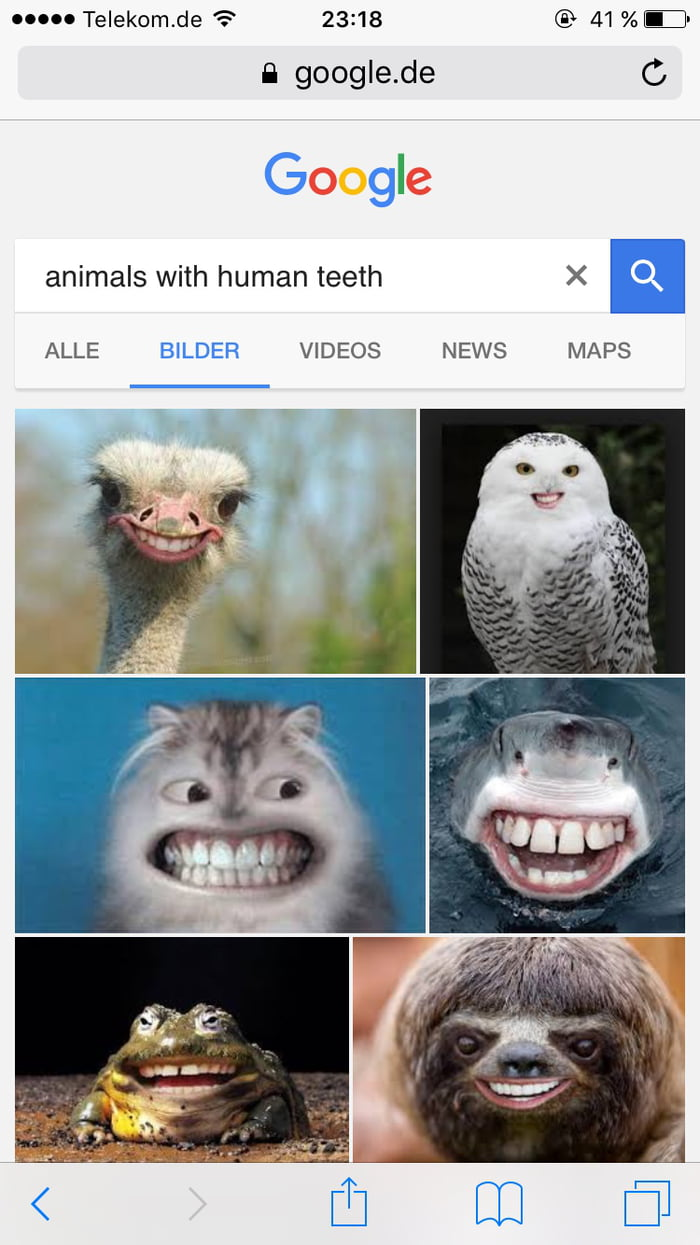 Image of: Chimpanzee Sometimes Google animals With Human Teeth And Laugh For Three Hours Straight Buzzfeed Sometimes Google animals With Human Teeth And Laugh For Three