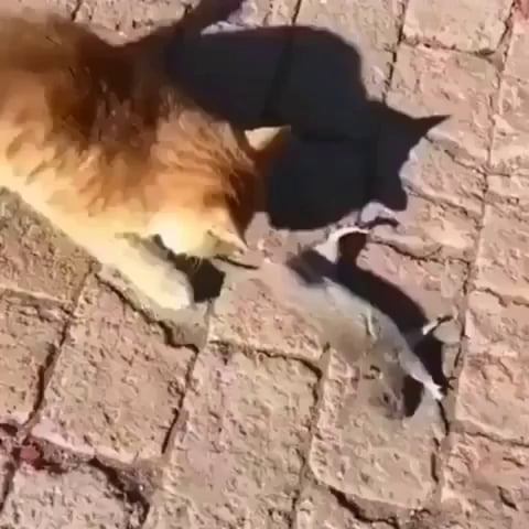 This mouse deserves an academy award for that acting