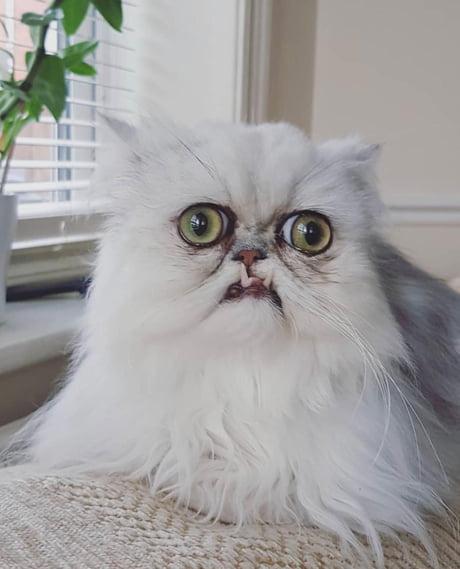 Weird Looking Cat 9