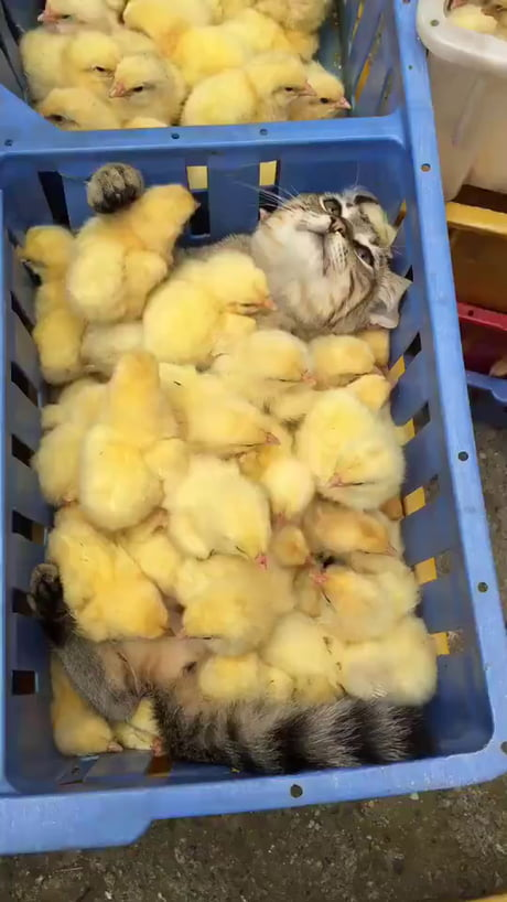 Pussy feeling pleasure being drowned in naked chicks