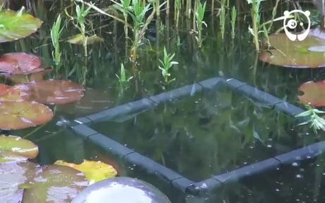 Inverted Aquarium