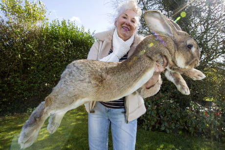 Meet Jeff. The big ass rabbit, he's the son of Darius who was previously the biggest rabbit in the world. The student is now the master.