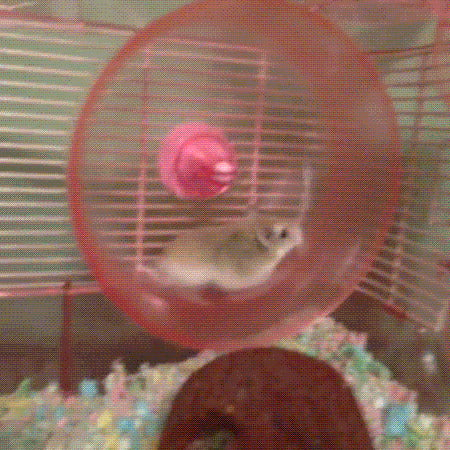 He forgot how to hamster