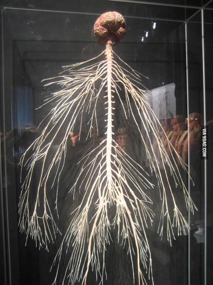 Body World: This is your nervous system