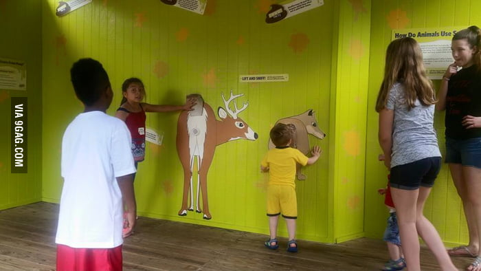 Interactive Quot Lift And Sniff Quot Area At Akron Zoo To Teach