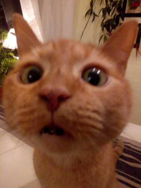 Animals On 9gag Cat Videos Dog Pics And Other Cute Animals