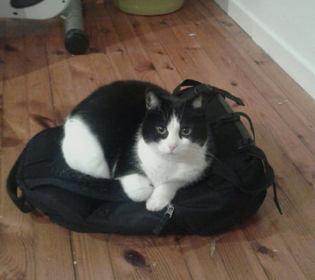 My cat always sits on backpacks for some reason.