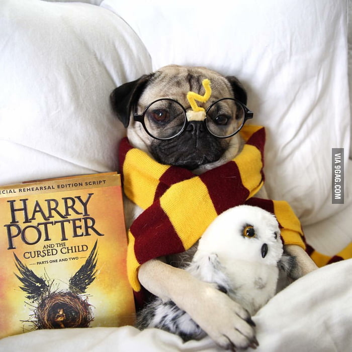 Harry Pug And The Cursed Dog 9gag