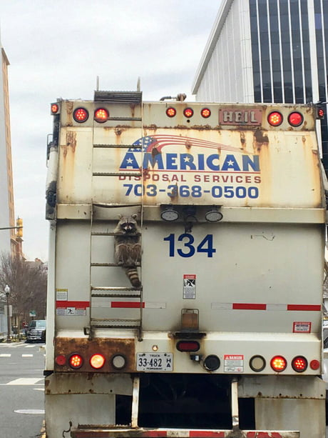 Just a trash raccoon, nothing to see here, move along