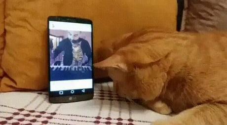 Blind cat enjoys music