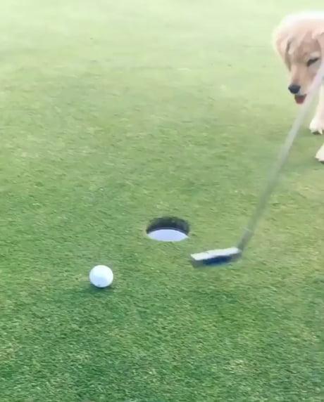 Doggo helpin human