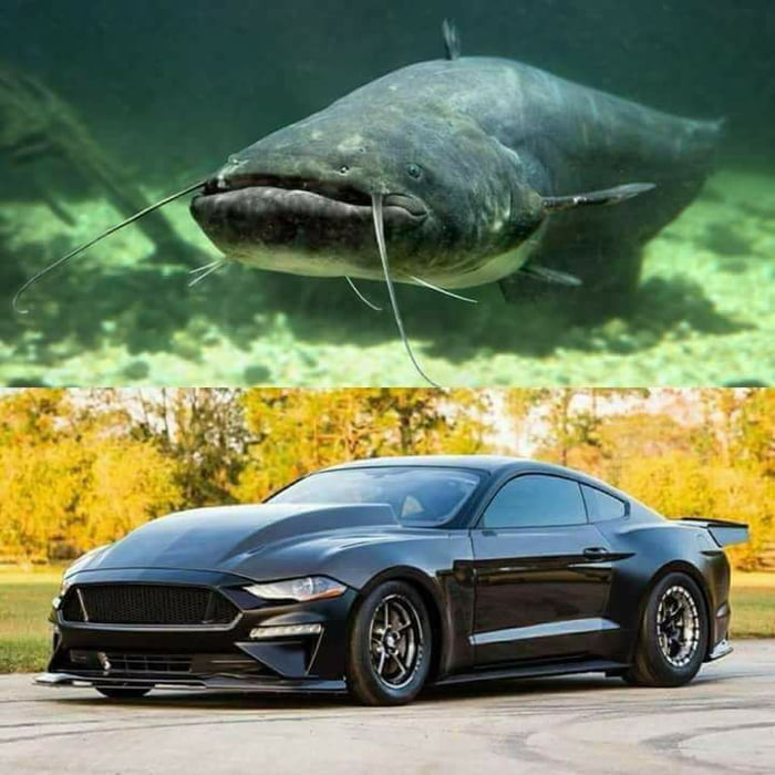And People Say Camaros Look Like A Catfish 9gag