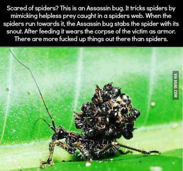 Spiders, eh?