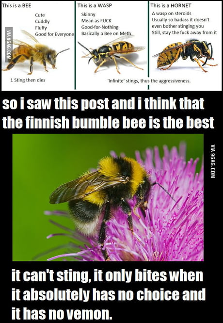 Fluffy Cute Bumblebee Insect - Smithcoreview