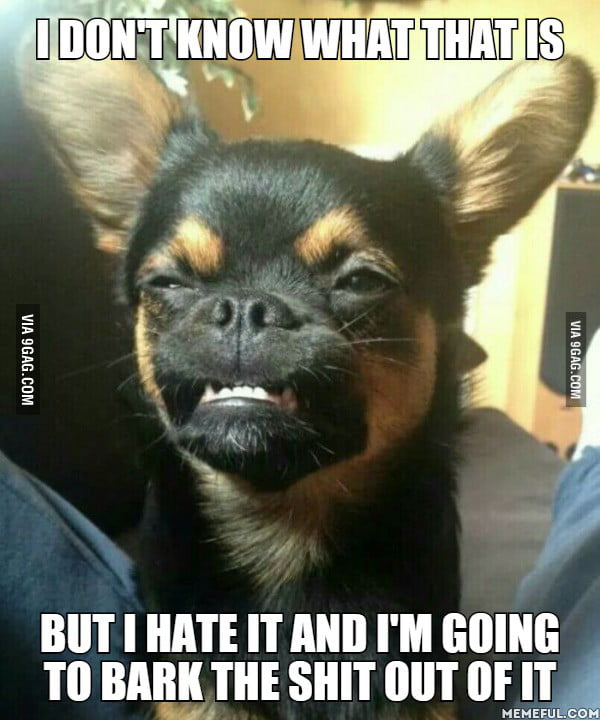 To The Guy Asking If His Dog Was A Potential Meme 9gag