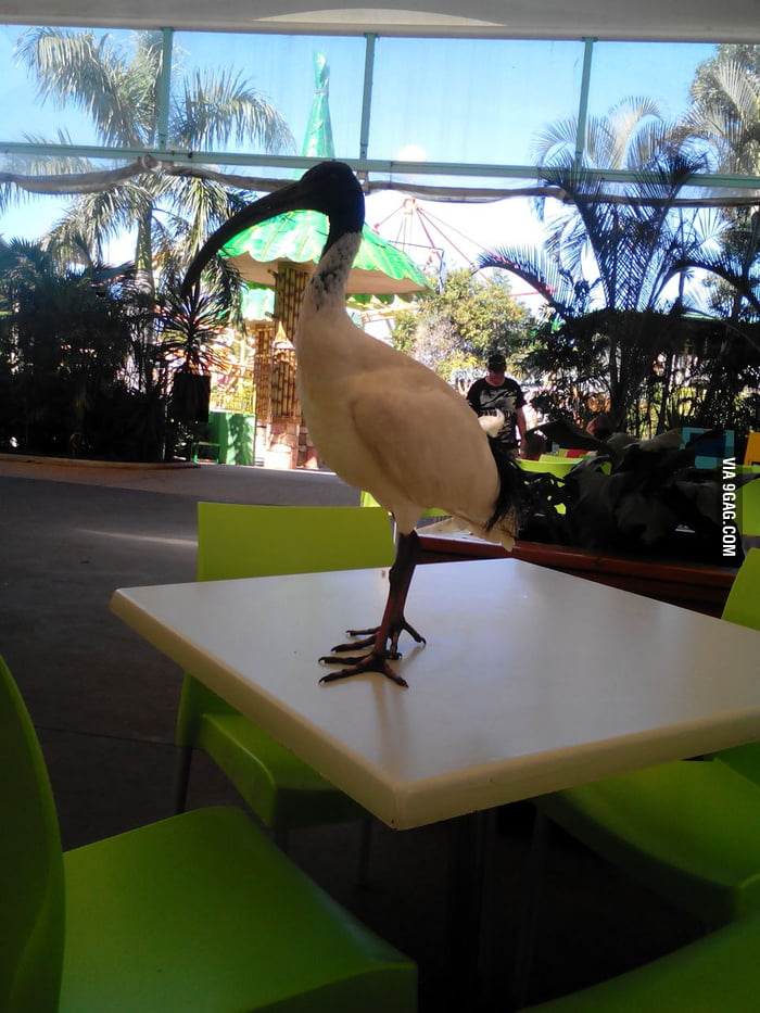 That Moment When Youre Eating Then You See A Big Ass Bird