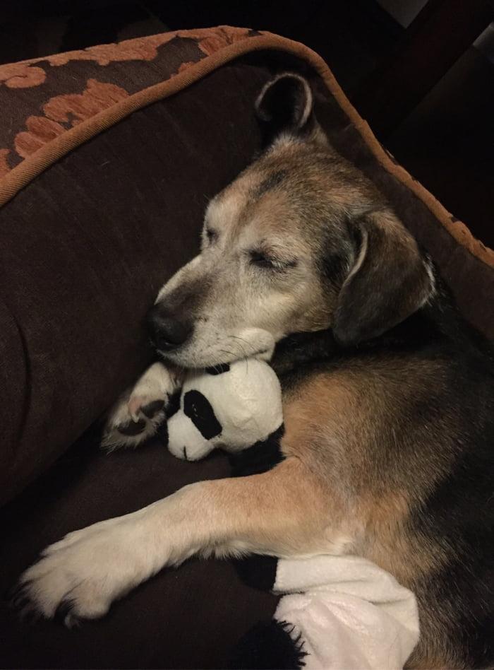 RIP Doge 2003-2017