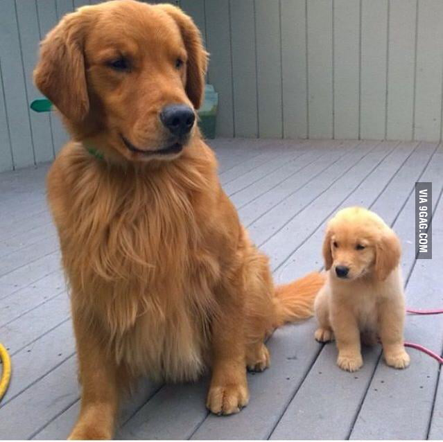 Father n' son...