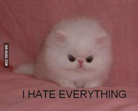 When you're short and people call you cute when you're angry