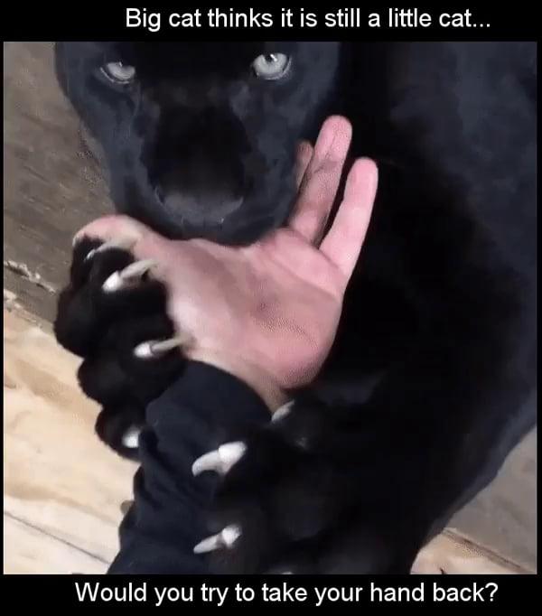 Cat nibbles fingers