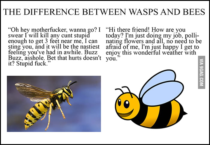 What Is The Difference Between A Yellow Jacket And A Wasp Difference betw...