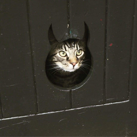 The guy I'm dating has the cutest cat flap I've ever seen.