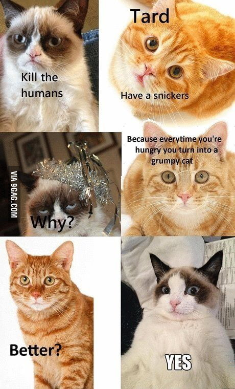 Grumpy Cat Eat A Snickers 9gag