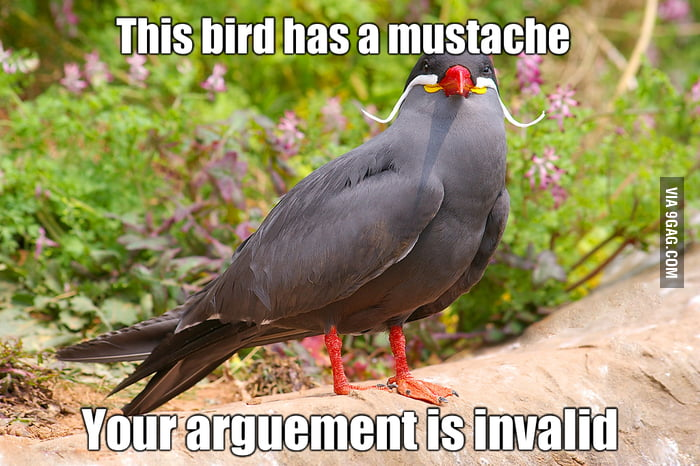 The bird has a mustache