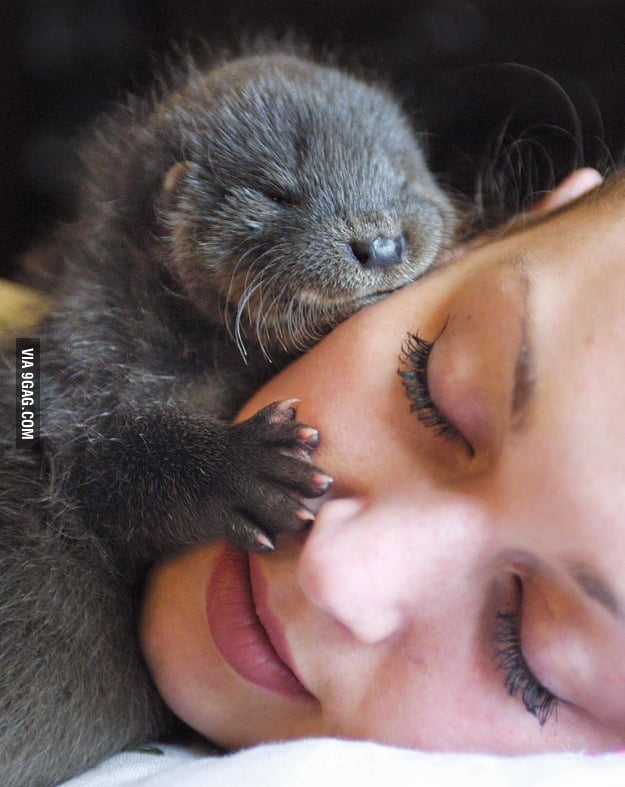 This is my significant otter.