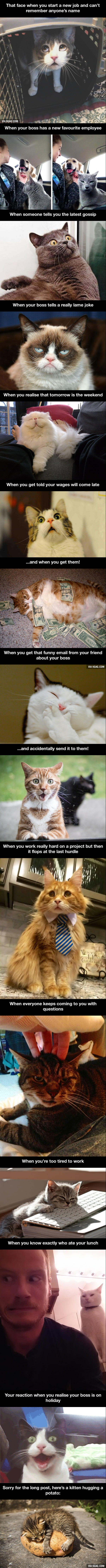 14 hilarious cats who behave exactly like us at work