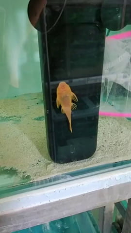 The fish is smarter than me